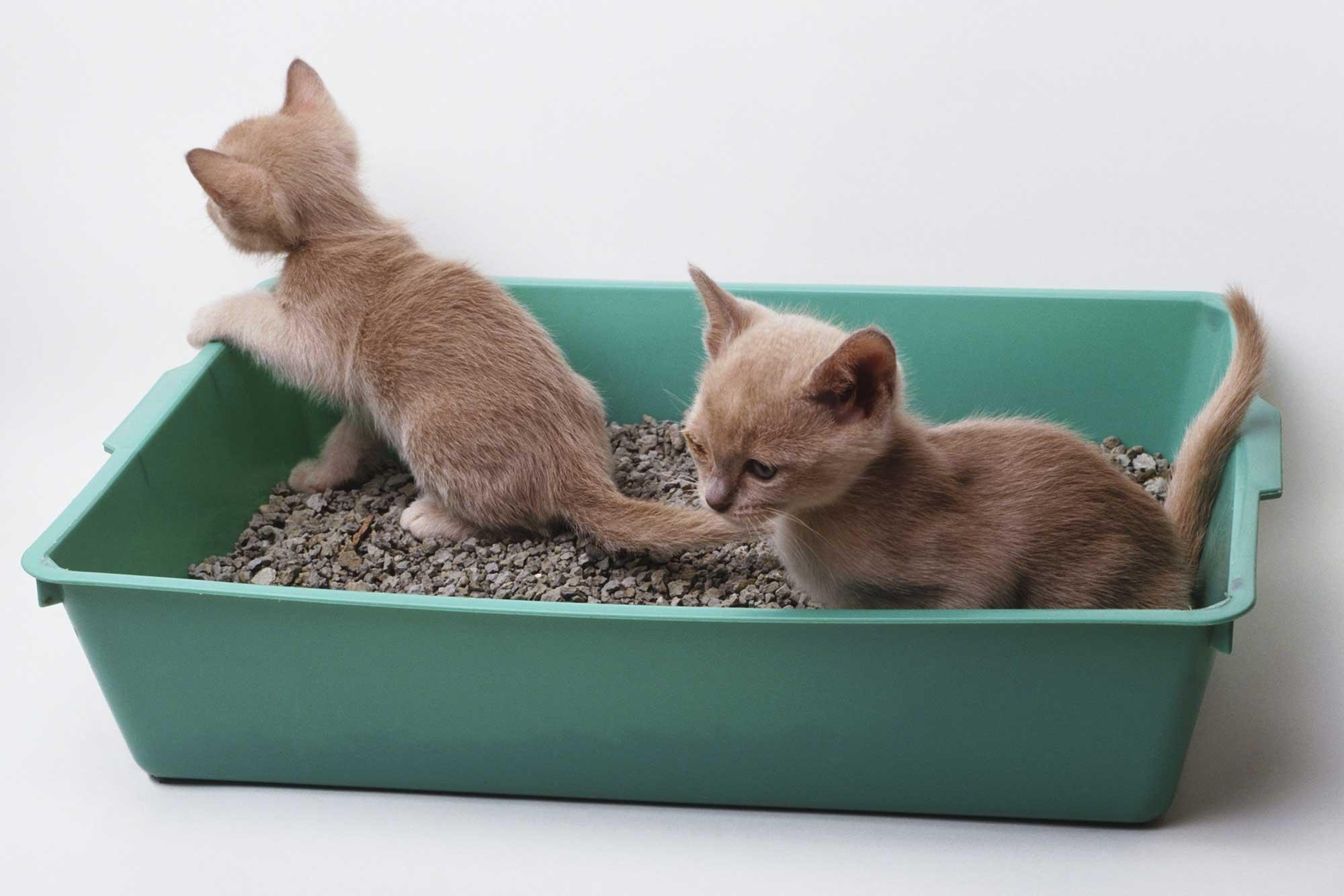 лоток для кошек как выбрать