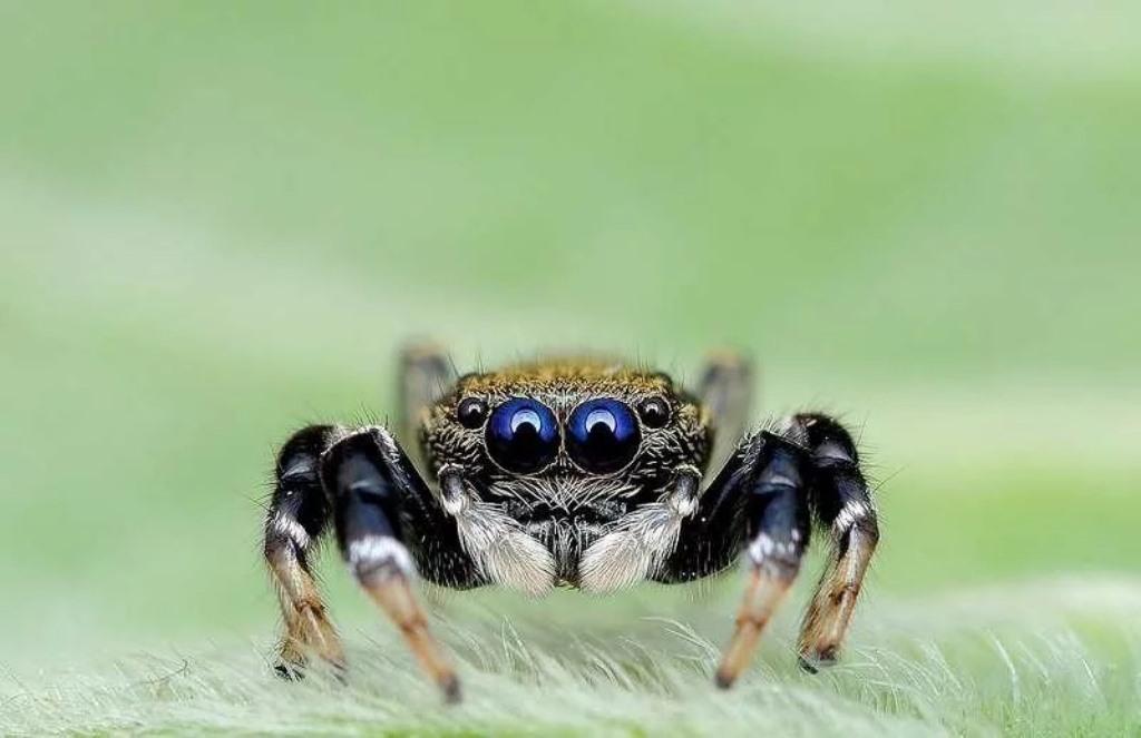 милый паук