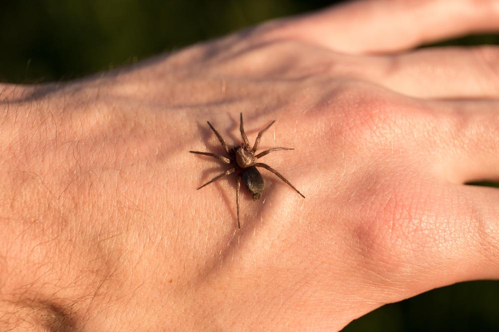 паук не опасен