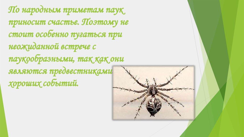 приметы с пауками