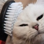 расчесывание кошек