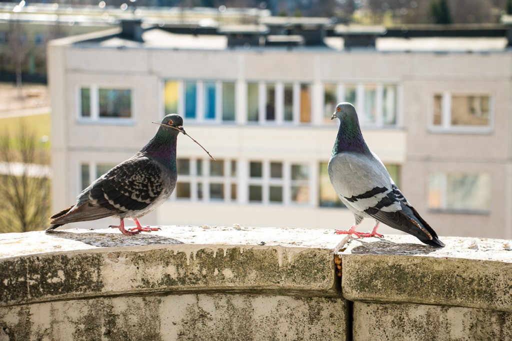 голуби на балконе фото