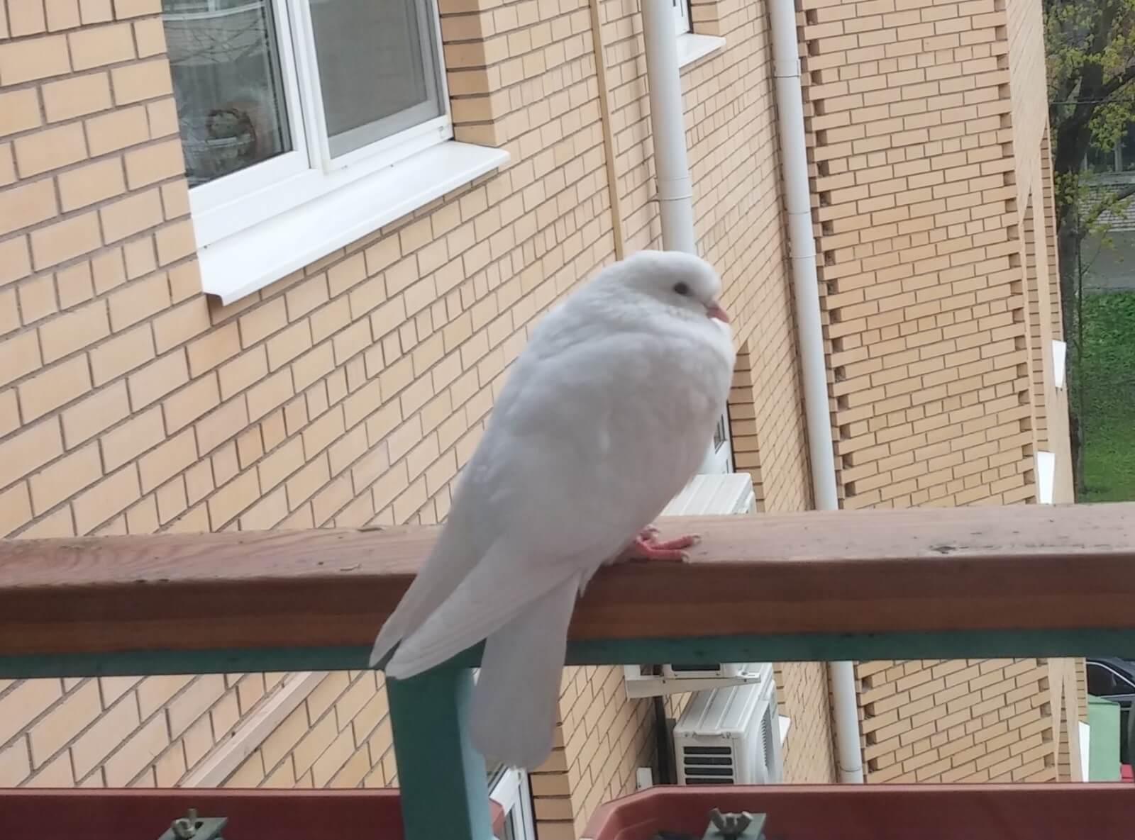 голуби на балконе и окне
