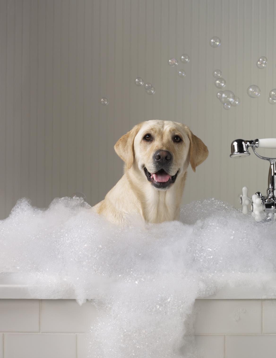 ванна с пеной для собаки