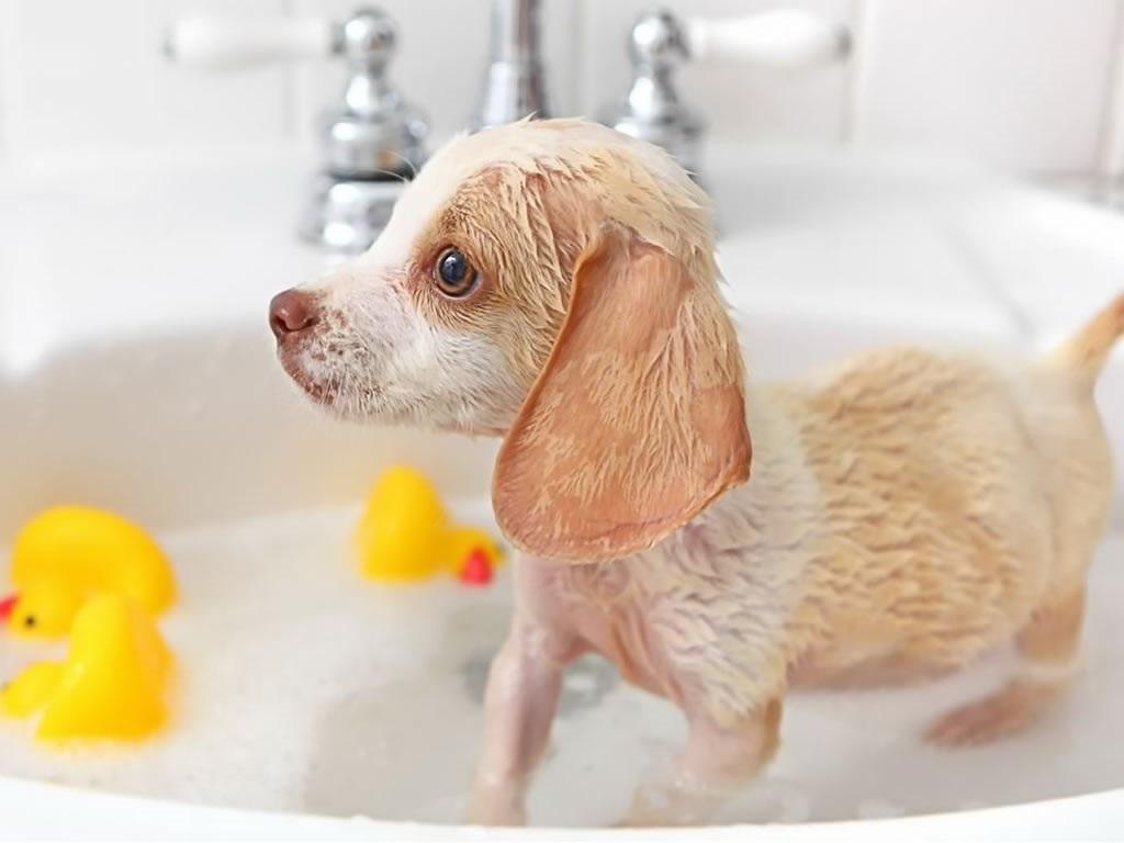 щенок в ванне с уточками