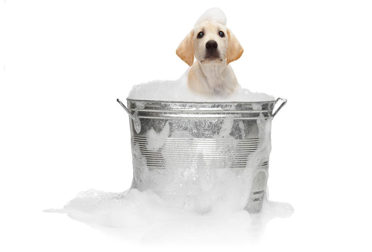 собака купается в ведре