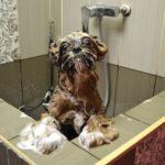 собака в душевой кабине