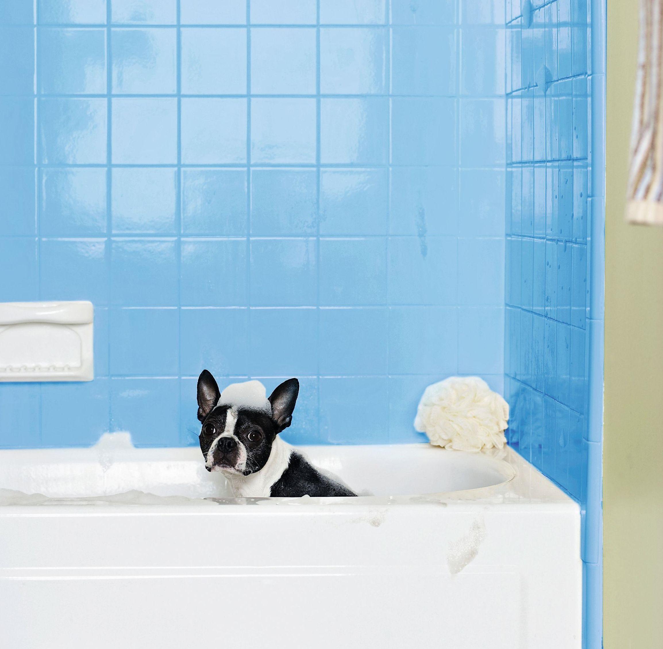 собака в ванной с голубым кафелем