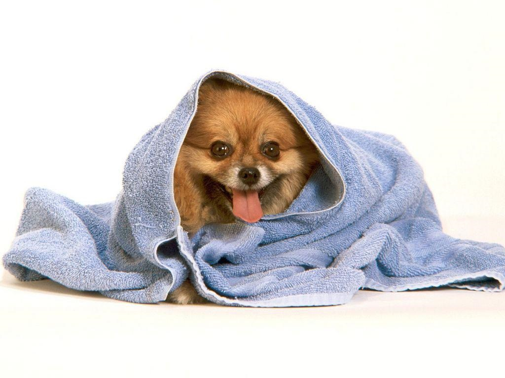 завернутая в полотенце собака