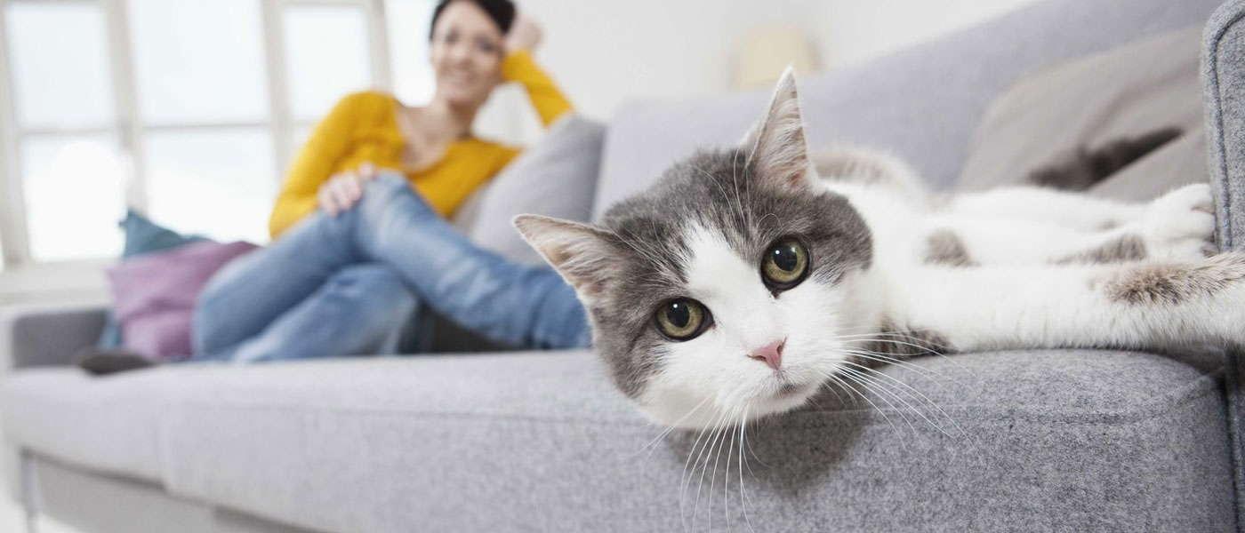 как почистить диван от кошачьей мочи