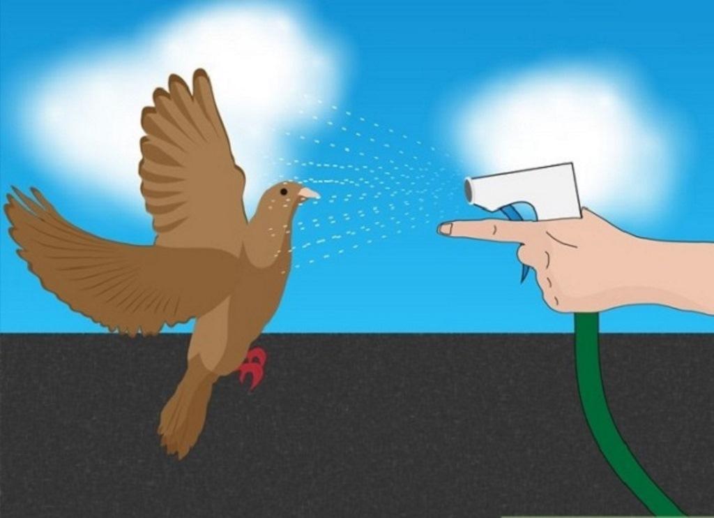 как прогнать голубей водой