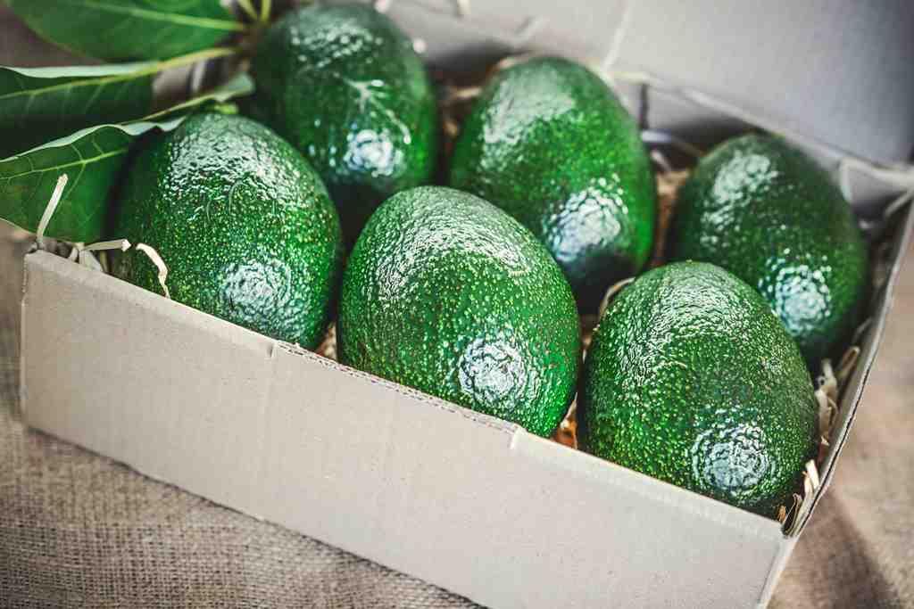 как хранить авокадо правильно