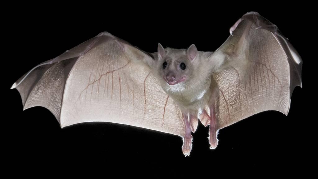 красивая летучая мышь