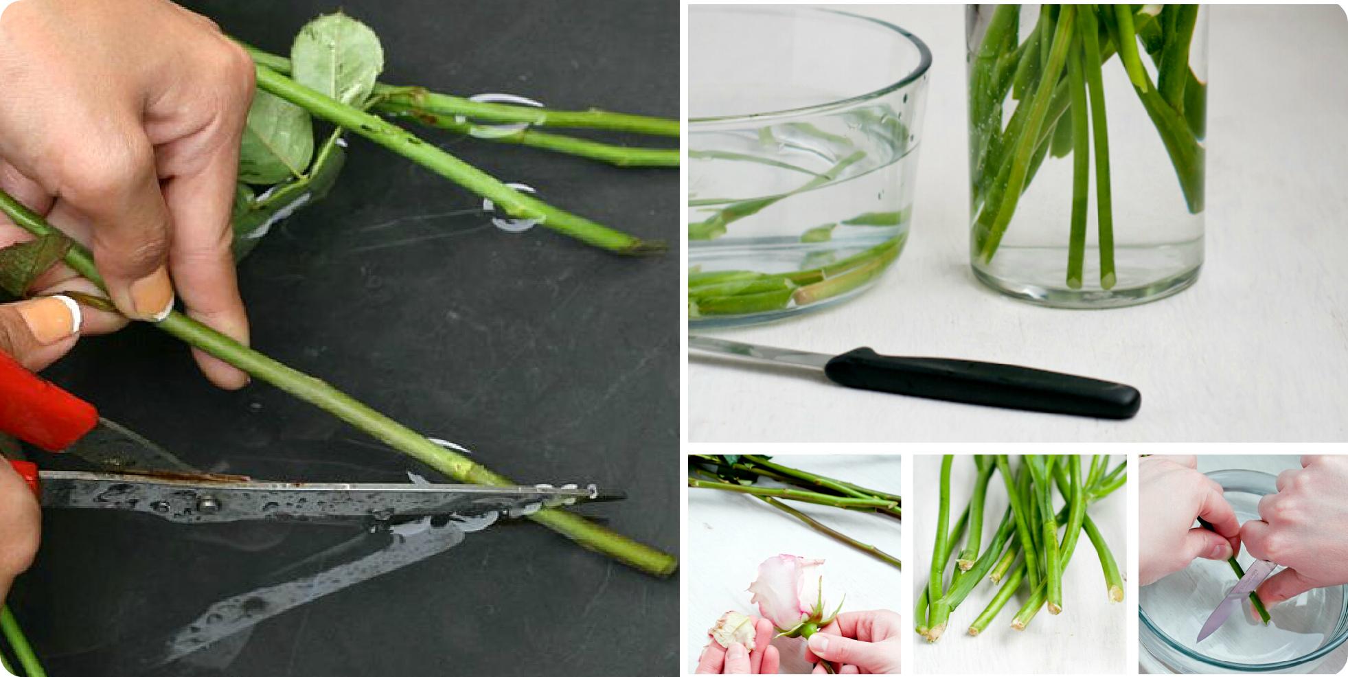 обработка цветов перед тем как поставить в вазу