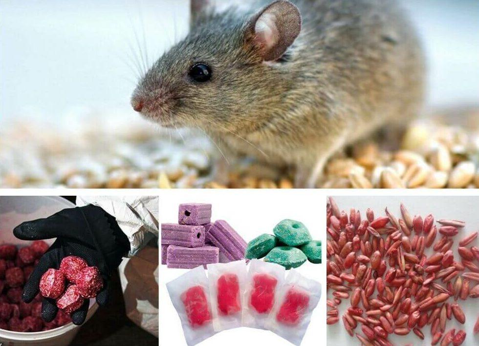 отравы для крыс