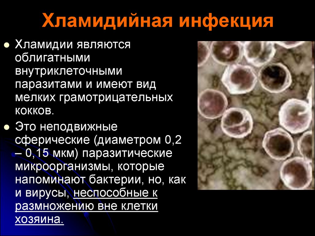 хламидии