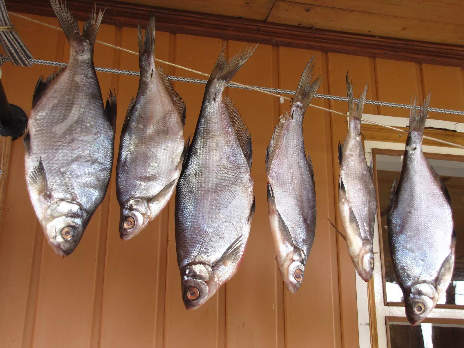 подвешенная рыба