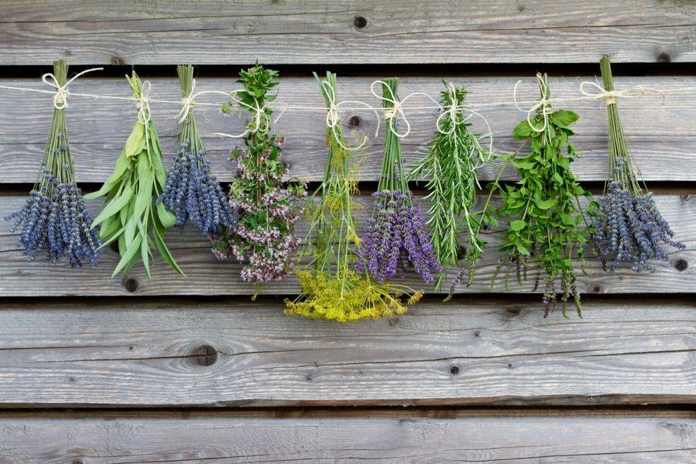 ароматные травы в доме