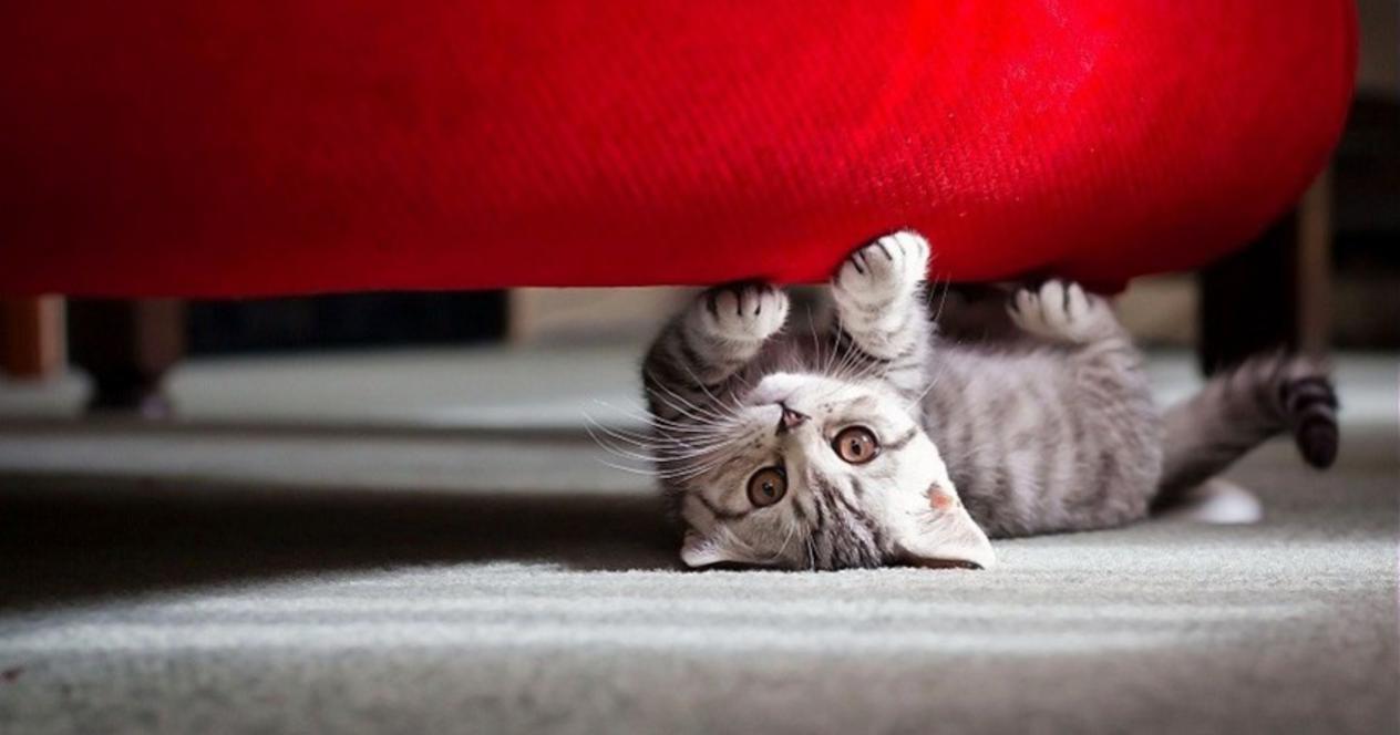 кошка не соблазнялась