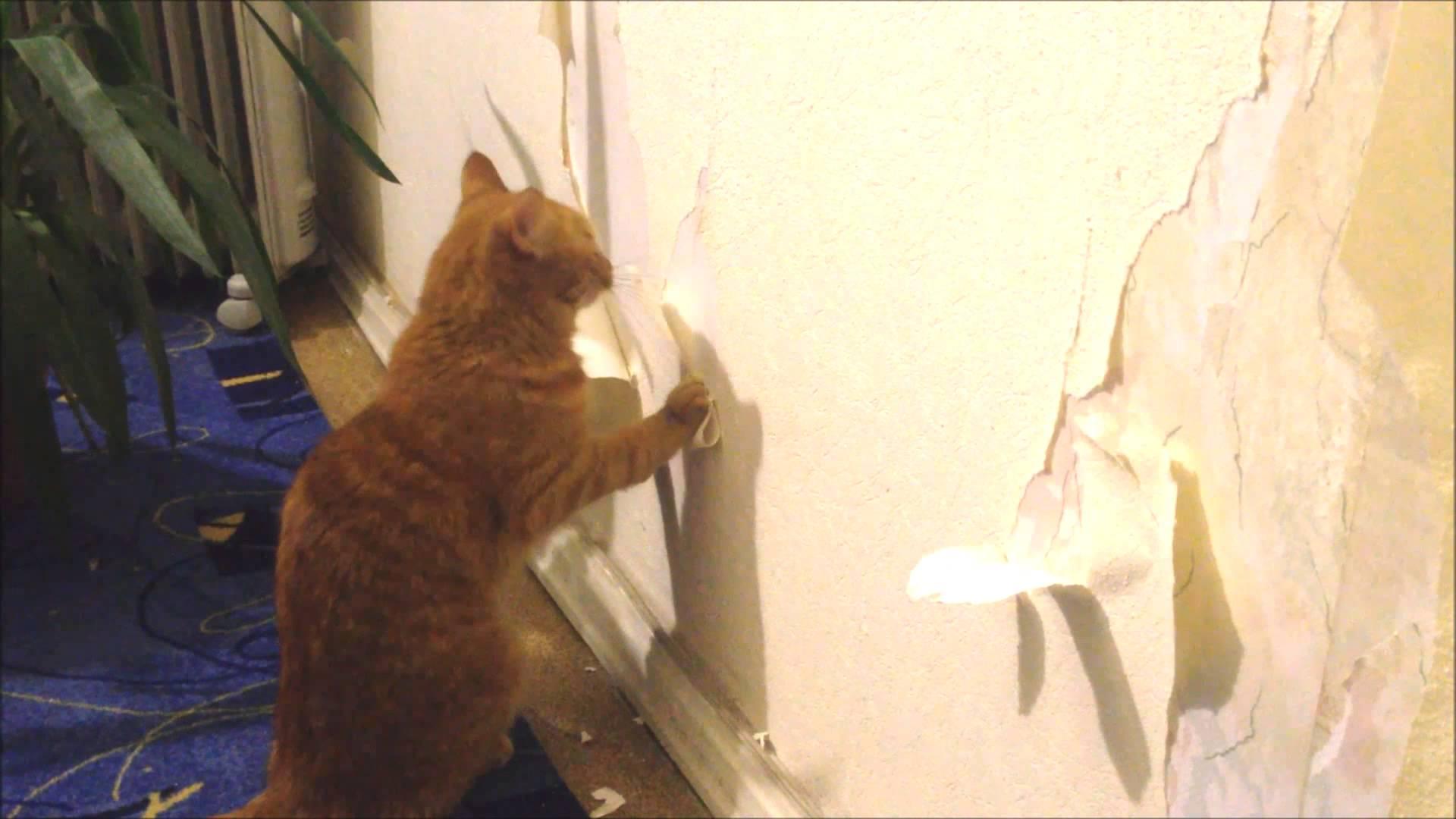 отучить кота драть