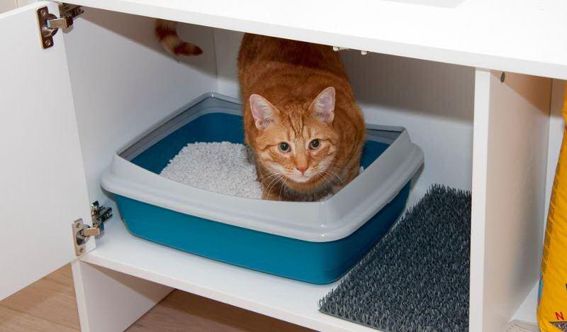 правила обустройства кошачьего лотка