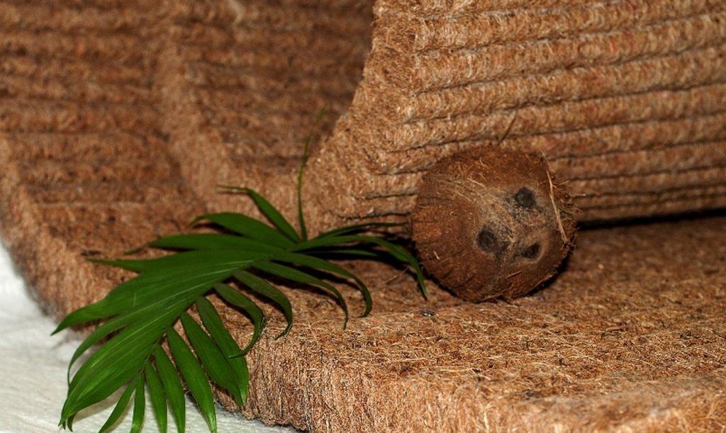 кокосовая койра для дивана