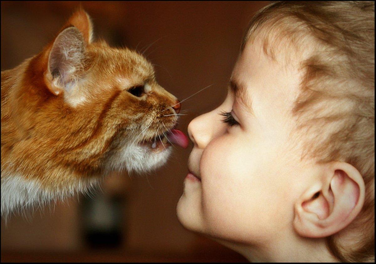 Вы целуете своих домашних животных фото