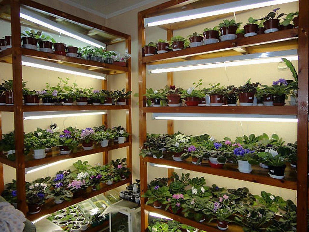 освещение для рассады и цветов