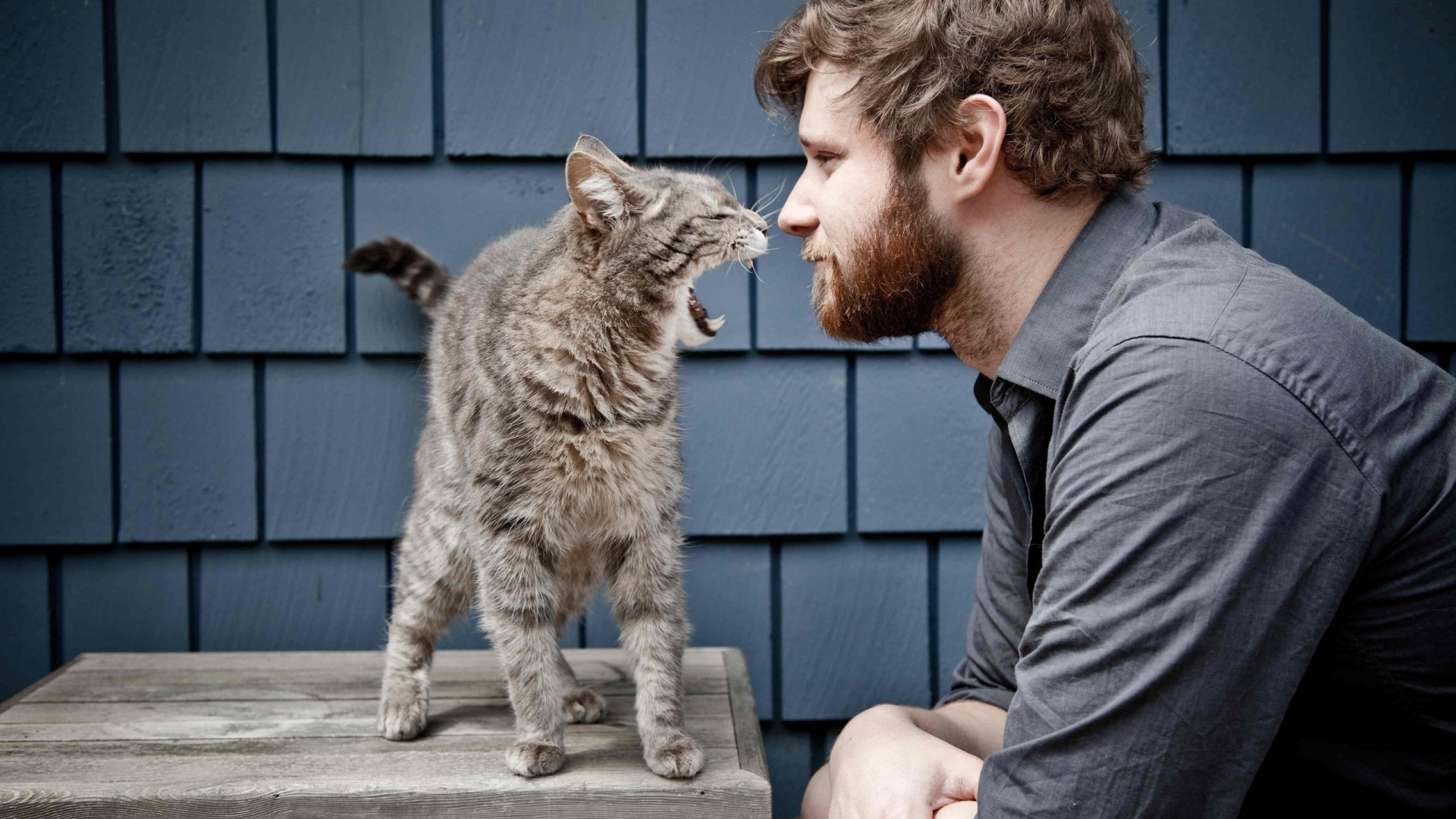 взаимопонимание с котом