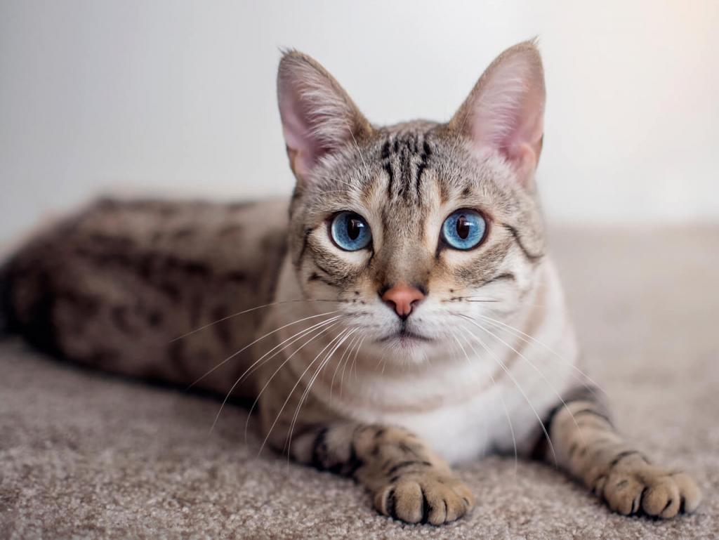 кот не гадит в лоток