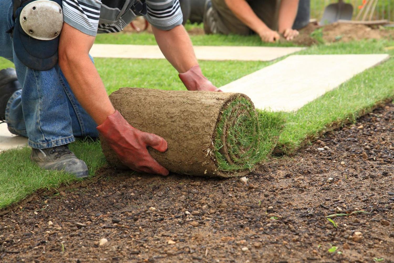 посев рулонной травы