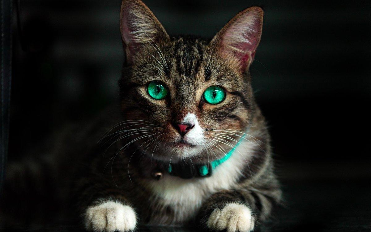 Фото кошек и котят разных пород прикольные писал