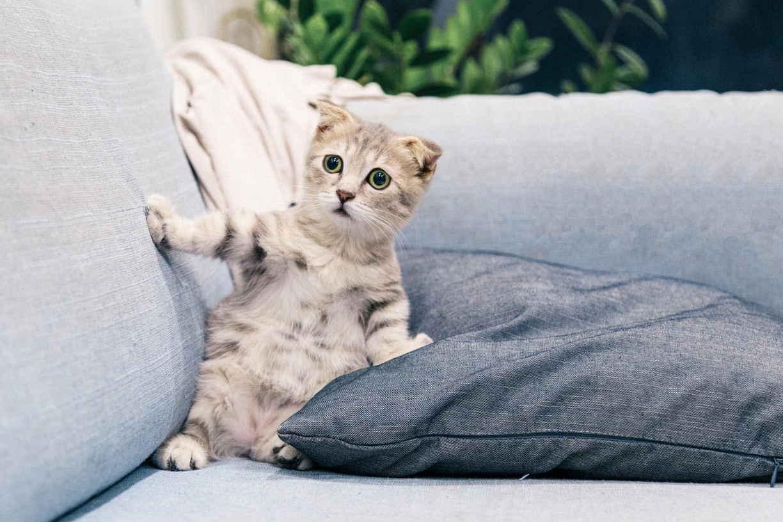 мочиться на диване