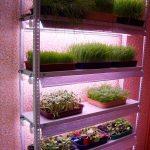 стеллаж для выращивания рассады интерьер