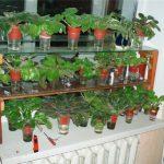 стеллаж для выращивания рассады интерьер фото