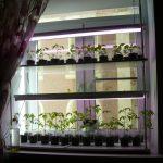 стеллаж для выращивания рассады интерьер идеи