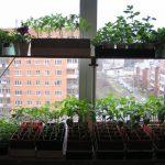 стеллаж для выращивания рассады идеи интерьера