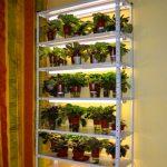 стеллаж для выращивания рассады оформление