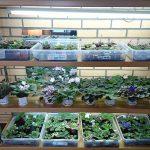 стеллаж для выращивания рассады фото оформление