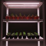 стеллаж для выращивания рассады идеи оформления