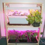 стеллаж для выращивания рассады варианты фото