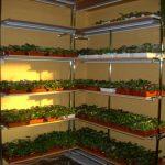 стеллаж для выращивания рассады фото варианты