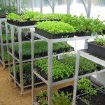 стеллаж для выращивания рассады фото виды