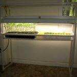 стеллаж для выращивания рассады виды оформления