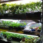 стеллаж для выращивания рассады фото дизайн