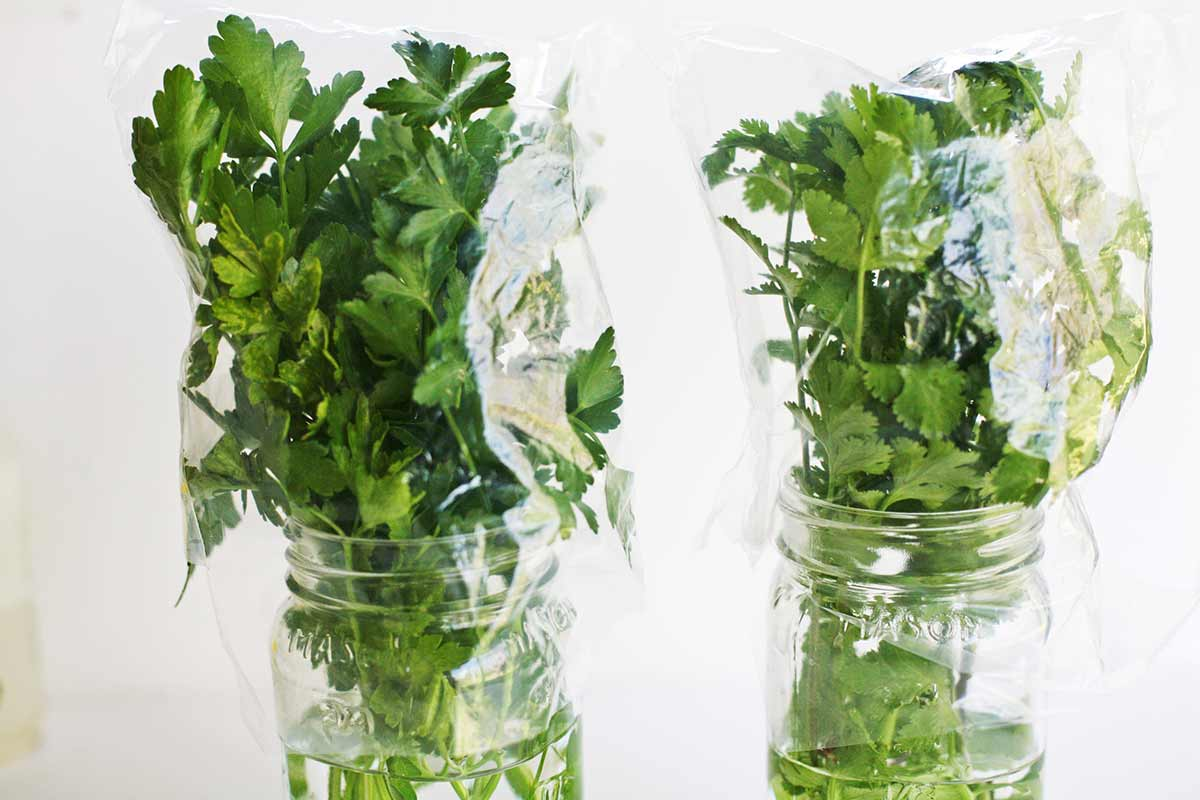 зелень с водой в холодильнике