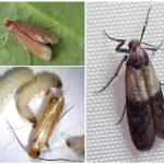 разный вид жуков