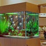 тумба аквариумная светлая