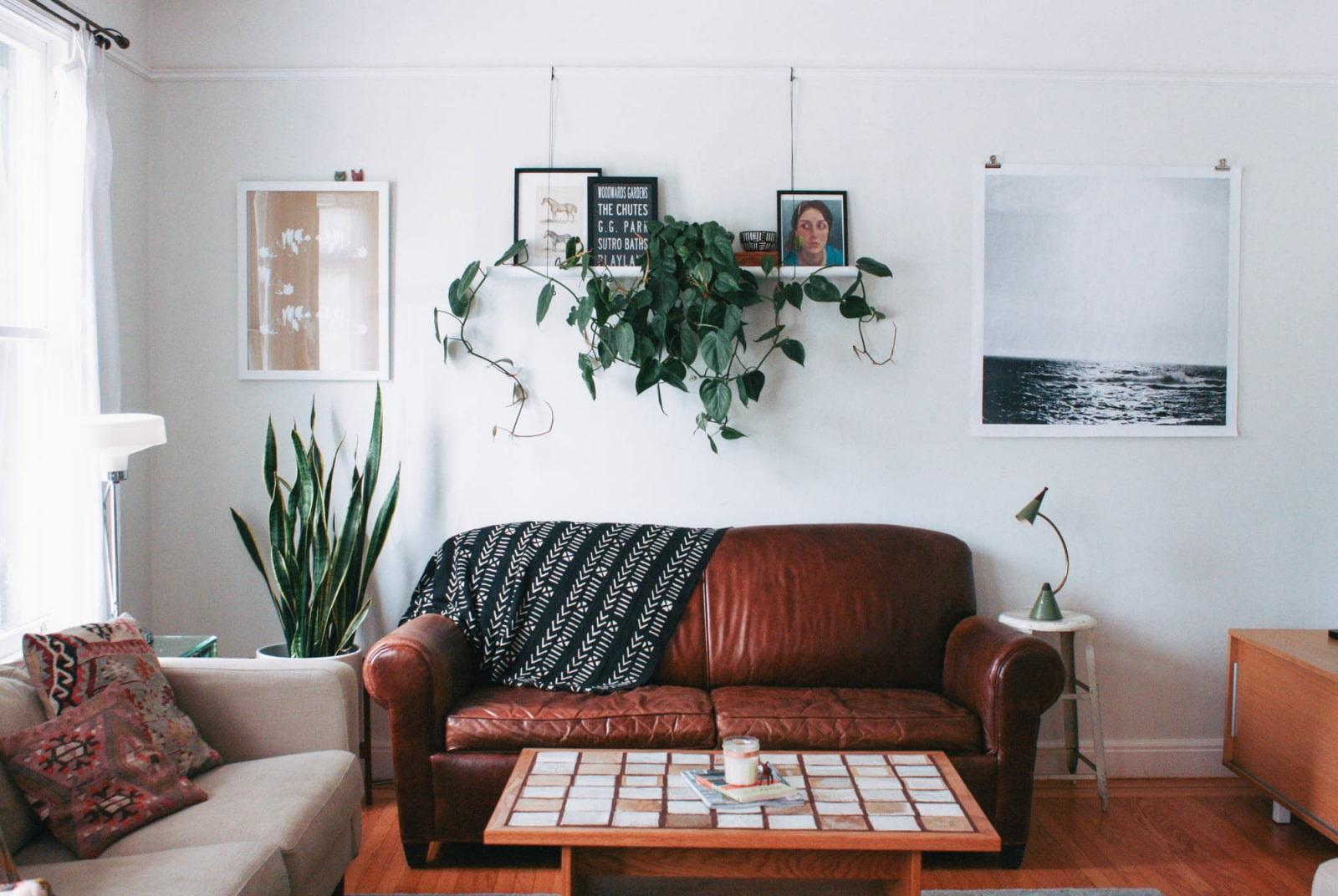 комнатные растения над диваном