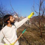 распыление раствора деревья